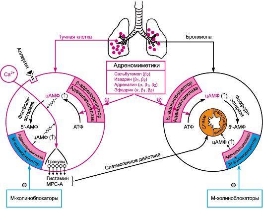 Препараты для лечения бронхиальной астмы - какие препараты для лечения астмы выбрать?
