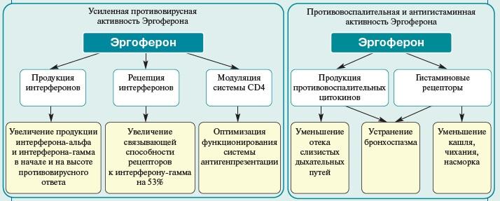 Принцип действия эргоферона