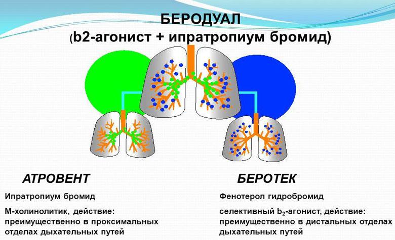 Препараты от астмы не влияющий на сердце