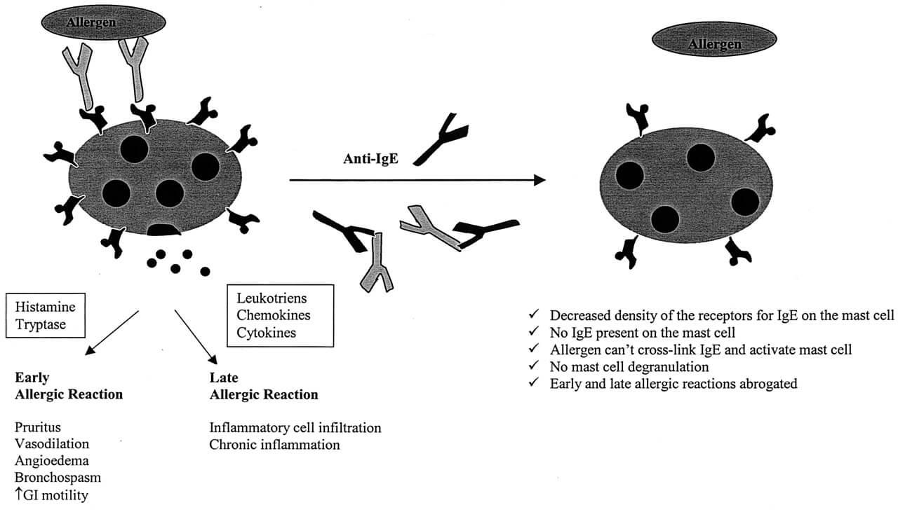 Анти-IgE терапия бронхиальной астмы