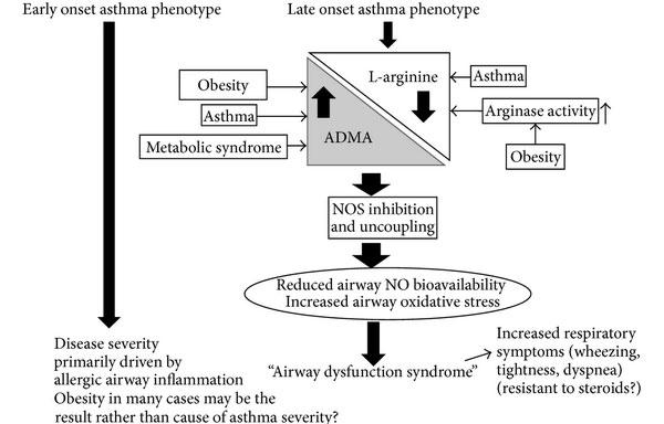 фенотип бронхиальной астмы с ожирением