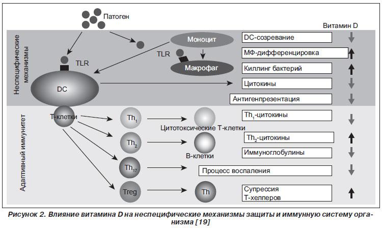 недостаток витамина D астма