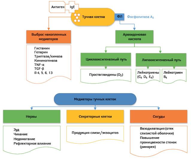 Влияние респираторной инфекции на бронхиальную астму