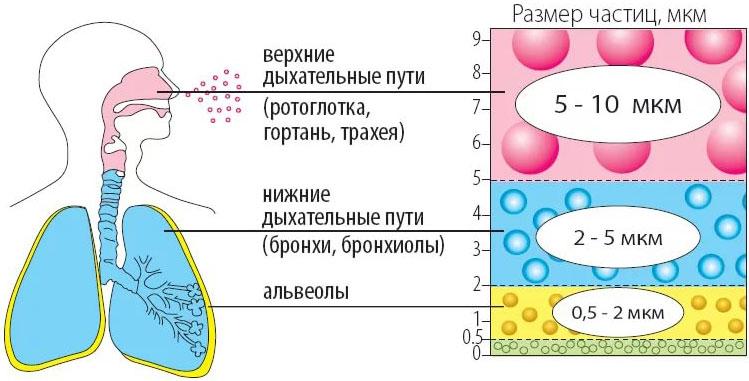 ингаляции новорожденным небулайзером