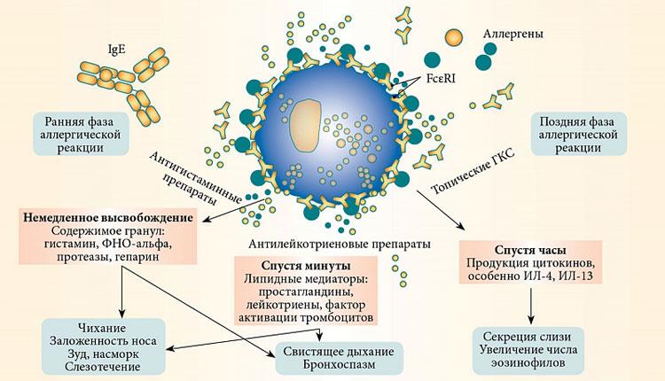 Аллергический ринит и полипоз
