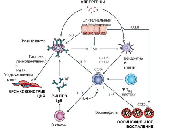 эозинофилы в крови при астме