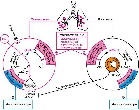 бронхиальная астма профилактика первичная вторичная третичная