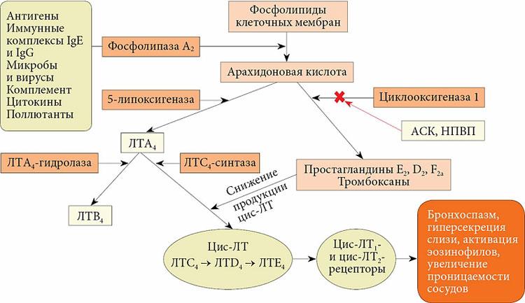 вирус-индуцированные осложнения бронхиальной астмы
