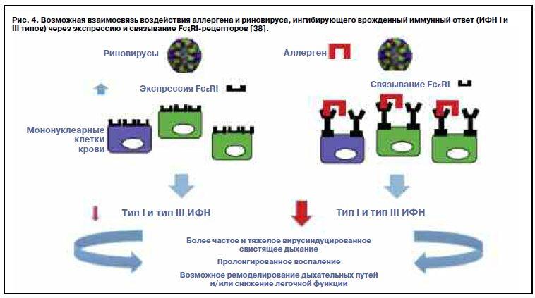 метапневмовирус при астме