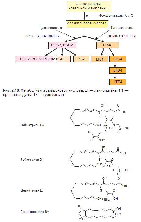 блокада лейкотриеновых рецепторов астма напряжения